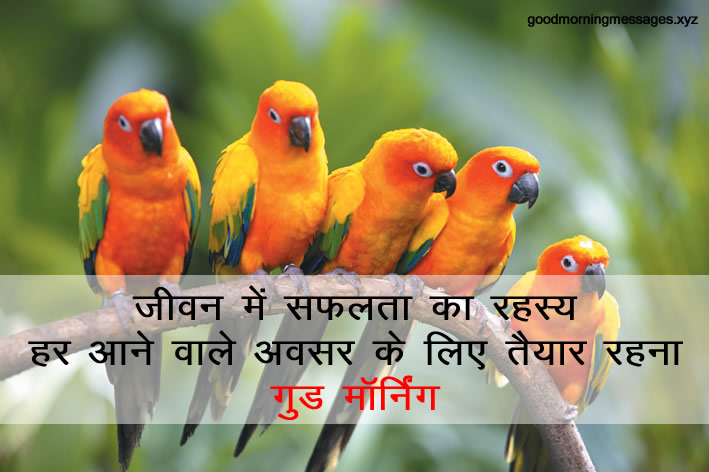 Good-Morning-Birds-Images-shubh-prabhat-Panchiyon-ki-pic